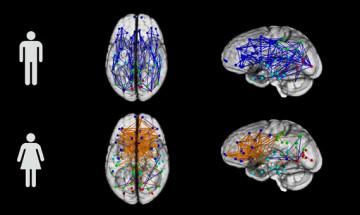 Hoe Mannen En Vrouwen Zijn Geschakeld Brainmatters